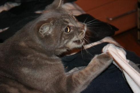 Dis sock es mine!