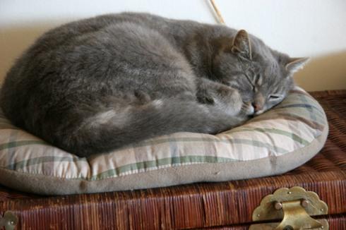 Sleeeepy